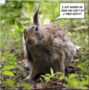 Speech Bubble Photo Posters - Just Washed My Hare Poster by Brian Wallace