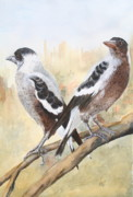Magpies Tapestries Textiles - Juvenile Maggies by Jan Lowe