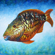 Juvenile Paintings - Juvenile Parrot Fish by Nancy Tilles