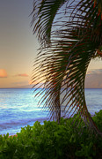 Lahaina Prints - Kaanapali Palms Sunrise Print by Kelly Wade
