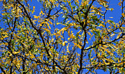 New England Fall Foliage Prints - Kaleidoscope Print by Corinne Rhode