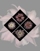 Heather Kirk - Kaleidoscope Diamond