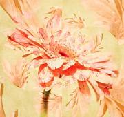 Kaleidoscope - Kaleidoscope of a Gerber Daisy by Cathie Tyler