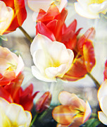 Kaleidoscope Art - Kaleidoscope Tulips 1 by Marilyn Hunt