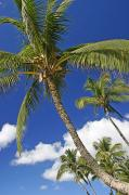 Overhang Photo Prints - Kamaole Beach Print by Ron Dahlquist - Printscapes