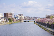 Kyoto Photo Framed Prints - Kamo River Framed Print by masahiro Makino