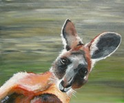 Kangaroo Paintings - Kangaroo  by Una  Miller