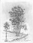 Jim Hubbard - Kansas-Cottonwood