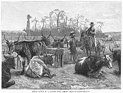 Longhorn Posters - Kansas: Texan Cattle, 1888 Poster by Granger