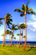 Coconut Palms Prints - Kapalua Palms Print by Kelly Wade