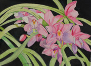 Botanical Drawings - Karens Orchids by John Edebohls
