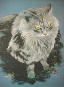 Persian Cat Pastels Posters - Karl Poster by Jackie  Hill