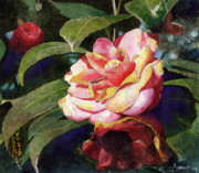 Flower Still Life Painting Framed Prints - Karma Camellia Framed Print by Andrew King