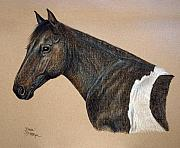 Color Pencil Drawings - Kathys Dixie by Suzanne McKee
