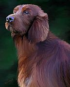 Irish Setter Posters - Katy Poster by David Wagner