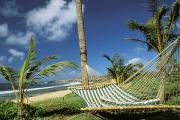 Hyatt Regency Hotel Framed Prints - Kauai Hammock Framed Print by Mary Van de Ven - Printscapes