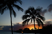 Surf Silhouette Prints - Kauai Hawaii Palm Tree Sunset Print by ELITE IMAGE photography By Chad McDermott