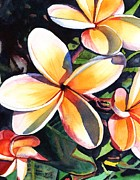 Plumeria Paintings - Kauai Rainbow Plumeria by Marionette Taboniar
