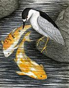 Koi Fish Drawings - Keep Dreaming by Don McMahon