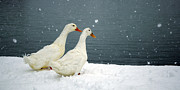 Snowstorm Greeting Cards Posters - Keep on Duckin Poster by Gib Martinez