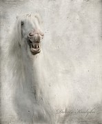 White Stallion Posters - Keep Smiling And Be Happy Poster by Dorota Kudyba