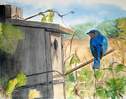 Bluebird Painting Originals - Keeping Watch by Angela Adam