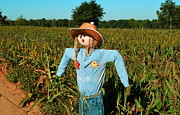 Cornfield Photos - Keeping watch by Monica Poole
