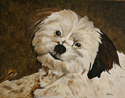 Maltese Dog Posters - Keisha Poster by Betty-Anne McDonald