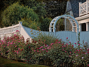 Trellis Prints - Kennedy Cottage Roses Print by Robin-Lee Vieira