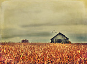 Cornfield Photos - Kentucky Corn Field by Darren Fisher