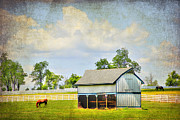 Grazing Horse Posters - Kentucky Pastures Poster by Darren Fisher