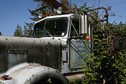 Wildcat Photography - Kenworth in the Brambles