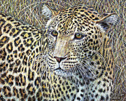 Leopards Paintings - Kenya Leopard by LeRoy Jesfield