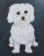 Custom Pet Paintings - Kenzie - Portrait of a Maltese by Ruthie Sutter