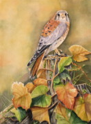 Red Leaves Painting Posters - Kestrel in Fall Poster by Patricia Pushaw