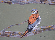 Bird Prints Paintings - Kestrel by Steven Marland