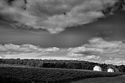 Pastoral Vineyard Photo Prints - Keuka Landscape VI Print by Steven Ainsworth