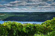 Vines Photo Framed Prints - Keuka Vineyard I Framed Print by Steven Ainsworth