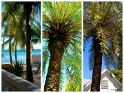 Botanical Beach Posters - Key West Palm Triplets Poster by Susanne Van Hulst