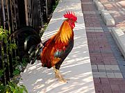 Black-tail Posters - Key West Rooster Poster by Susanne Van Hulst