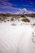 Beachy Prints - Kiawah Island Beachwalker Print by Dustin K Ryan