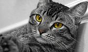 Cats Photo Metal Prints - Kickin back Metal Print by Craig Incardone