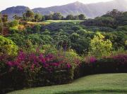 Putt Photos - Kiele Course, flowers and vegetation by Carl Shaneff - Printscapes