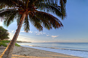 Coconut Palm Tree Posters - Kihei Maui Hawaii Sunrise Coconut Palm  Poster by Dustin K Ryan