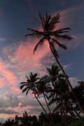 Coconut Trees Posters - Kihei tropical sunset Poster by Pierre Leclerc