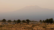 Herd Animals Prints - Kilimanjaro Dusk Print by Joe Bonita