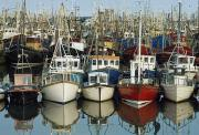 Fishing Trawler Framed Prints - Kilkeel, Co Down, Ireland Rows Of Boats Framed Print by The Irish Image Collection