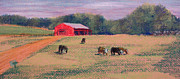 Connecticut Drawings Prints - Killingworth Cattle Print by Tina McCurdy