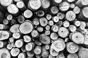 Woodpile Prints - Kindling Pile Print by Patrick M Lynch