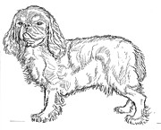 Dogs Drawings - King Charles Spaniel by David Burkart